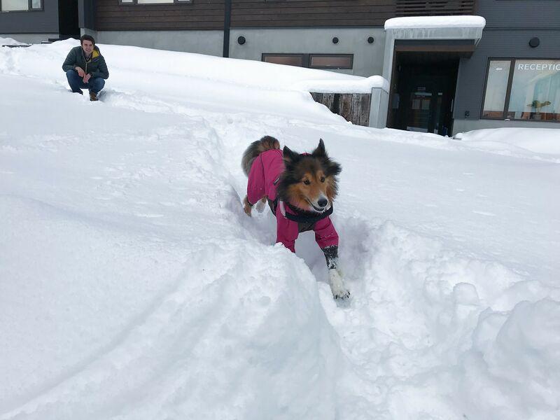 snowdog village rocca playing in snow