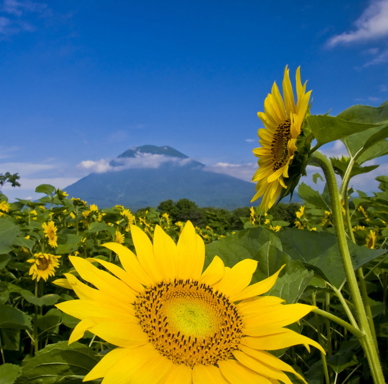 5 reasons you should visit Niseko this Summer