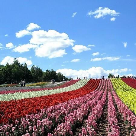 Hokkaido Road Trip: 2-day trip to Furano and Biei