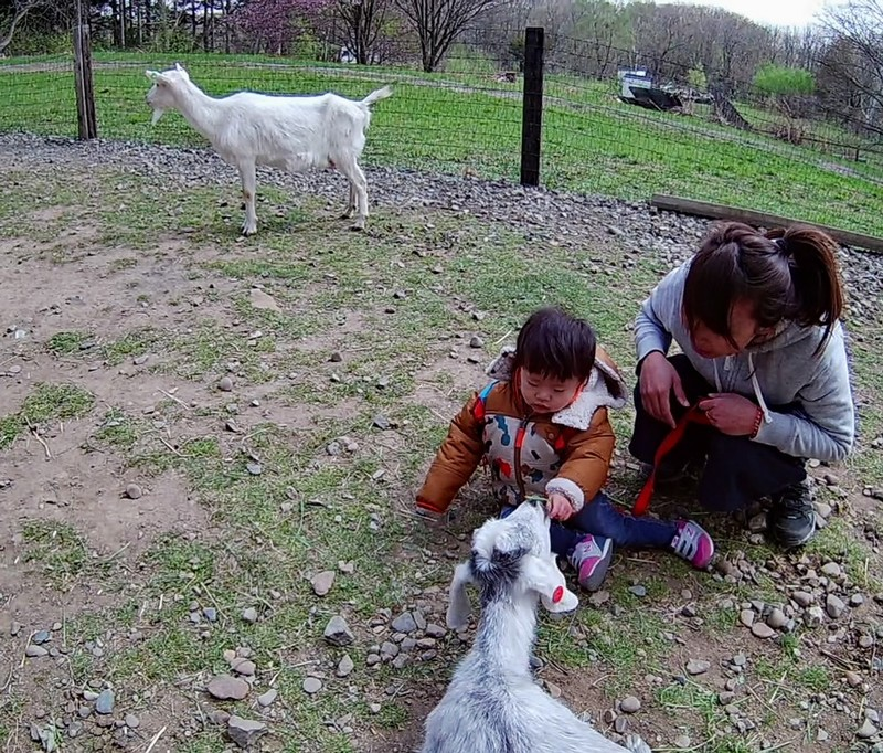 Children playing with animals at Heidi Farm Hokkaido