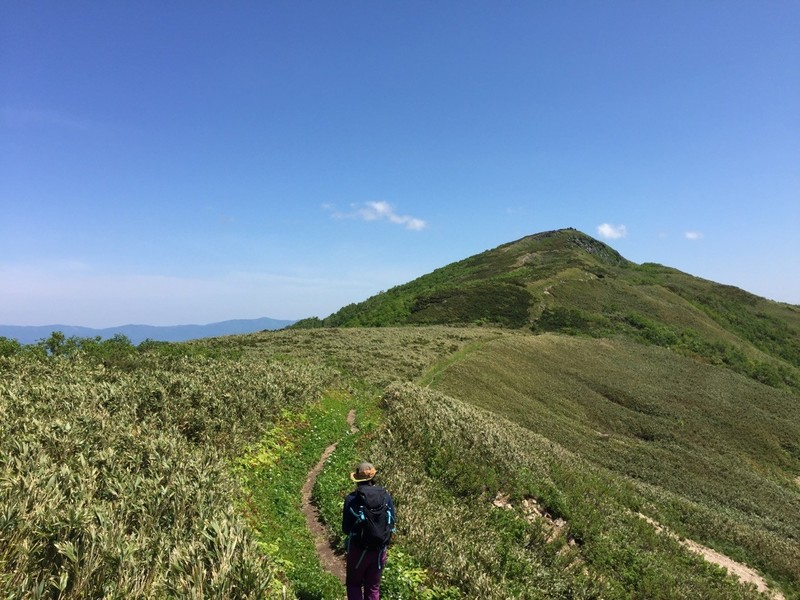 白樺山からシャクナゲ岳への道