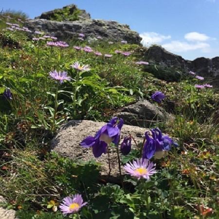 白樺山の尾根に咲く紫の花