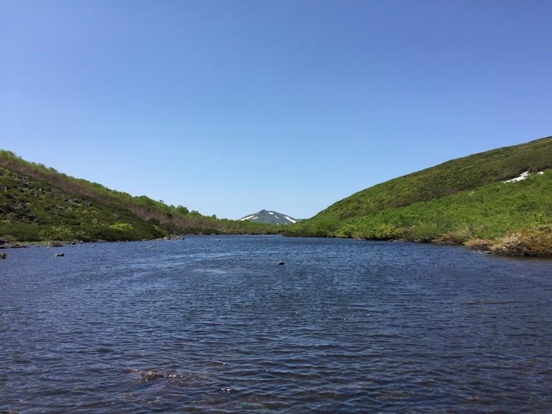 夏のシャクナゲ沼