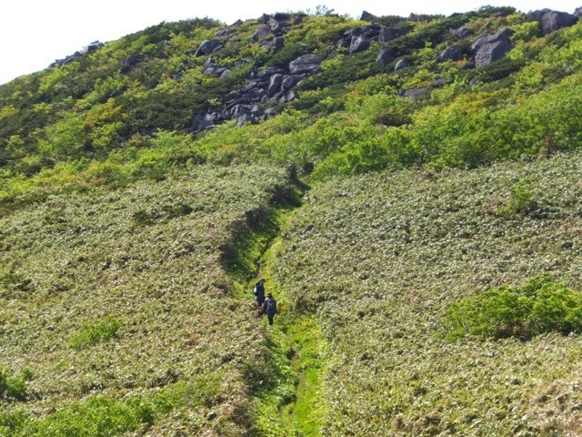 シャクナゲ岳を下山する
