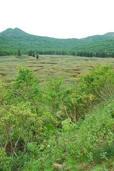 大谷地の湿原