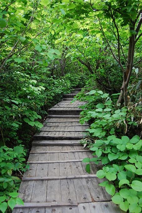 緑に囲まれた神仙沼の木の歩道