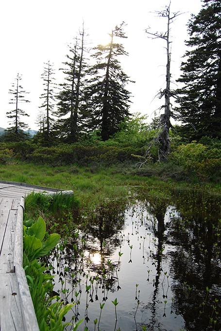 夏の神仙沼