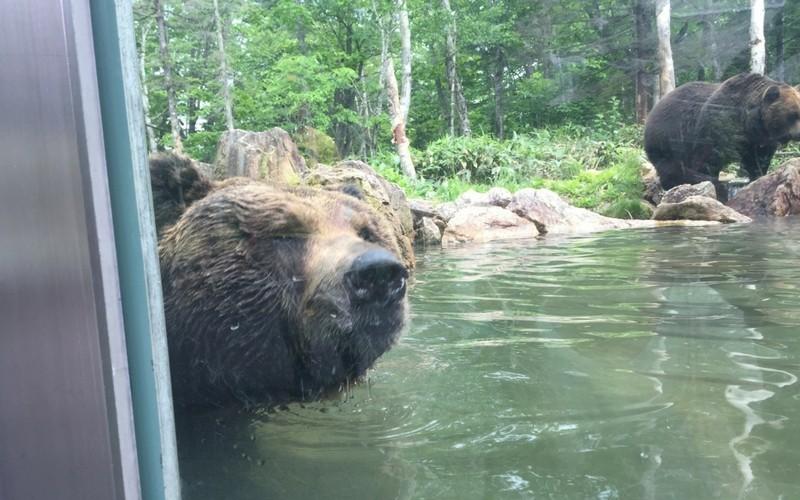 ベアマウンテンの池で遊ぶクマ