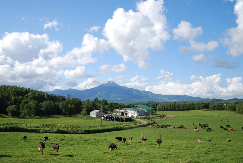 ニセコ有島のダチョウ牧場