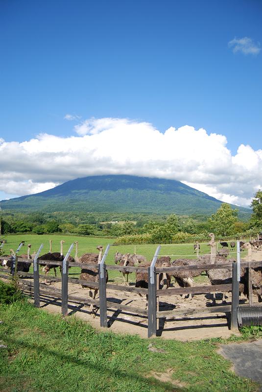 雲を被った羊蹄山とダチョウたち