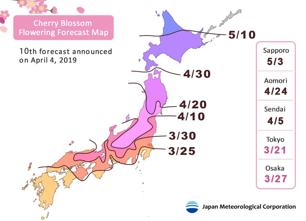sakura cherry blossom niseko hokkaido