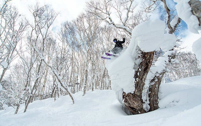 niseko japan powder tree ski