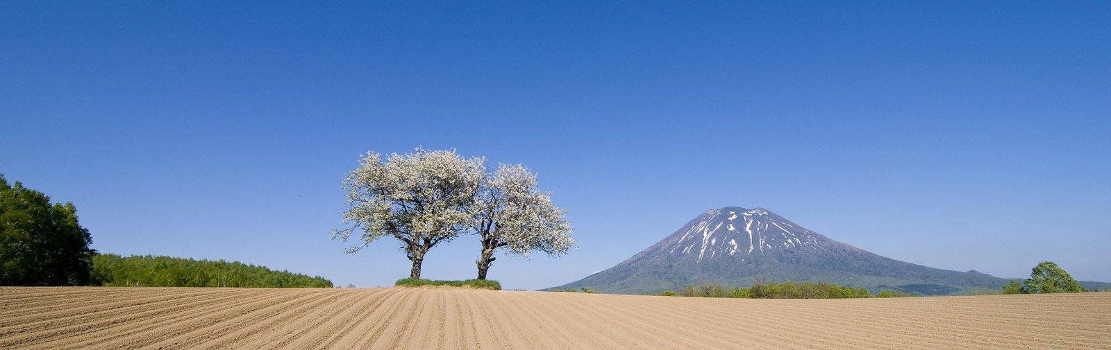 Mount Yotei green season