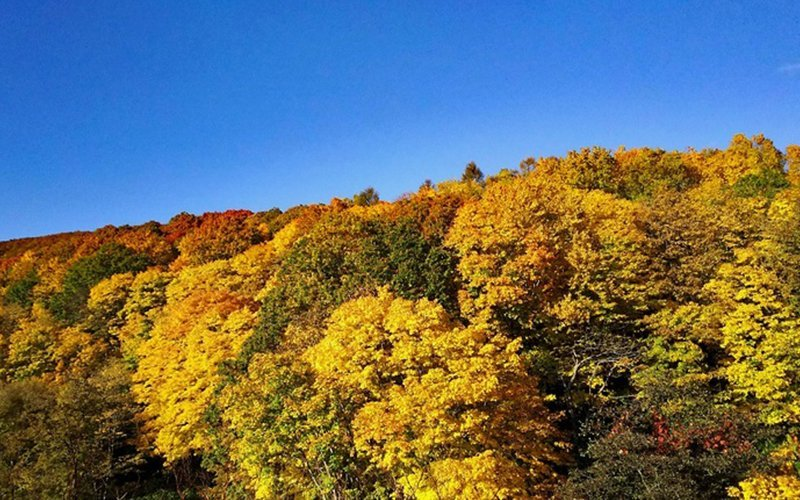 Hiking up the mountain is one of the best ways to enjoy the autumn foliage.