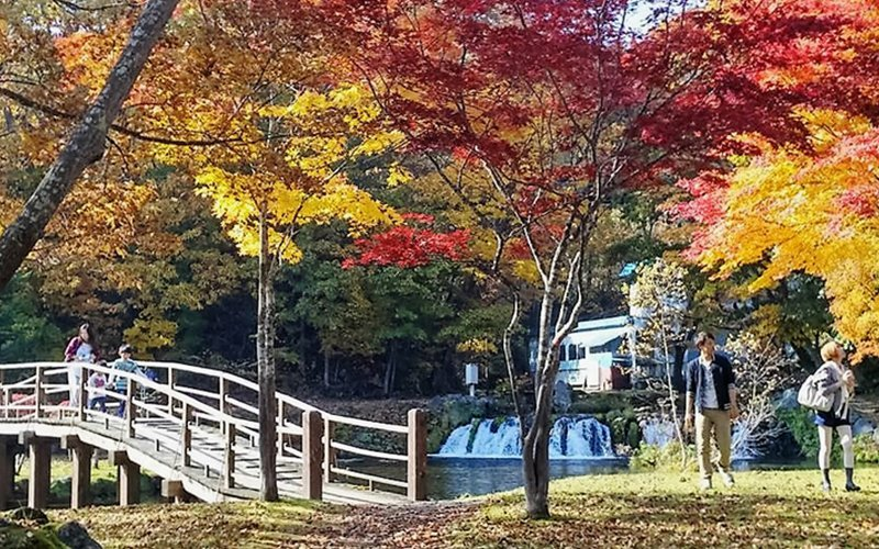 The Japanese-style Fukidashi Park is filled with colorful red leaves. The spacious grassland is a good place for family to enjoy an afternoon under the sun and enjoy the koyo.
