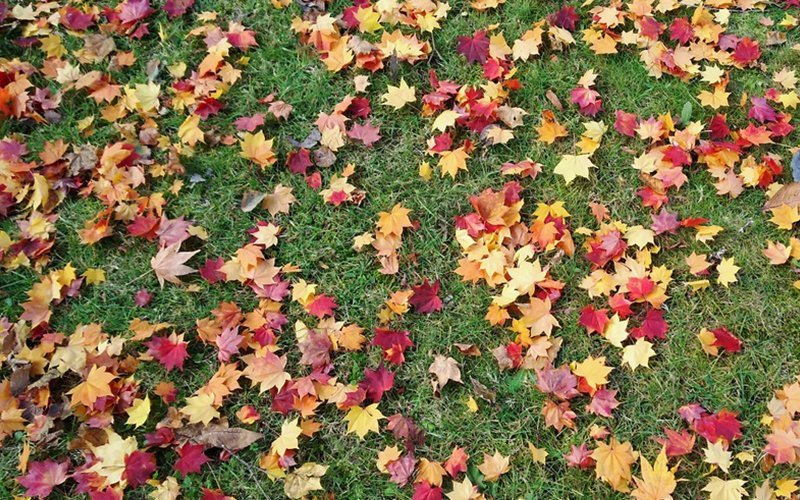 Fallen leaves towards the end of Autumn.