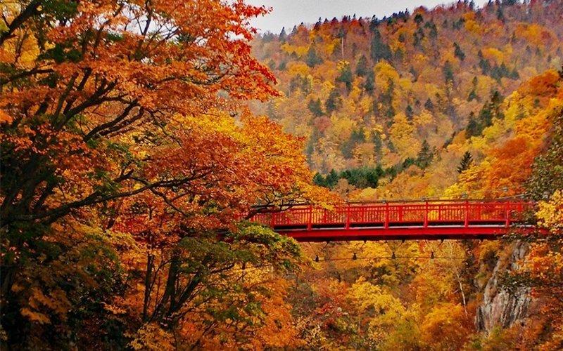 Futami Suspension Bridge is one of best scenic spots for foliage photos in Jozankei.