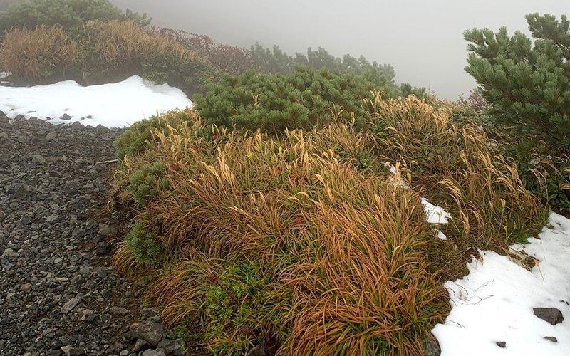 Snow on Mt Yotei.