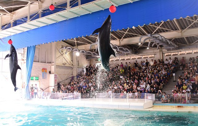 dolphin show otaru aquarium