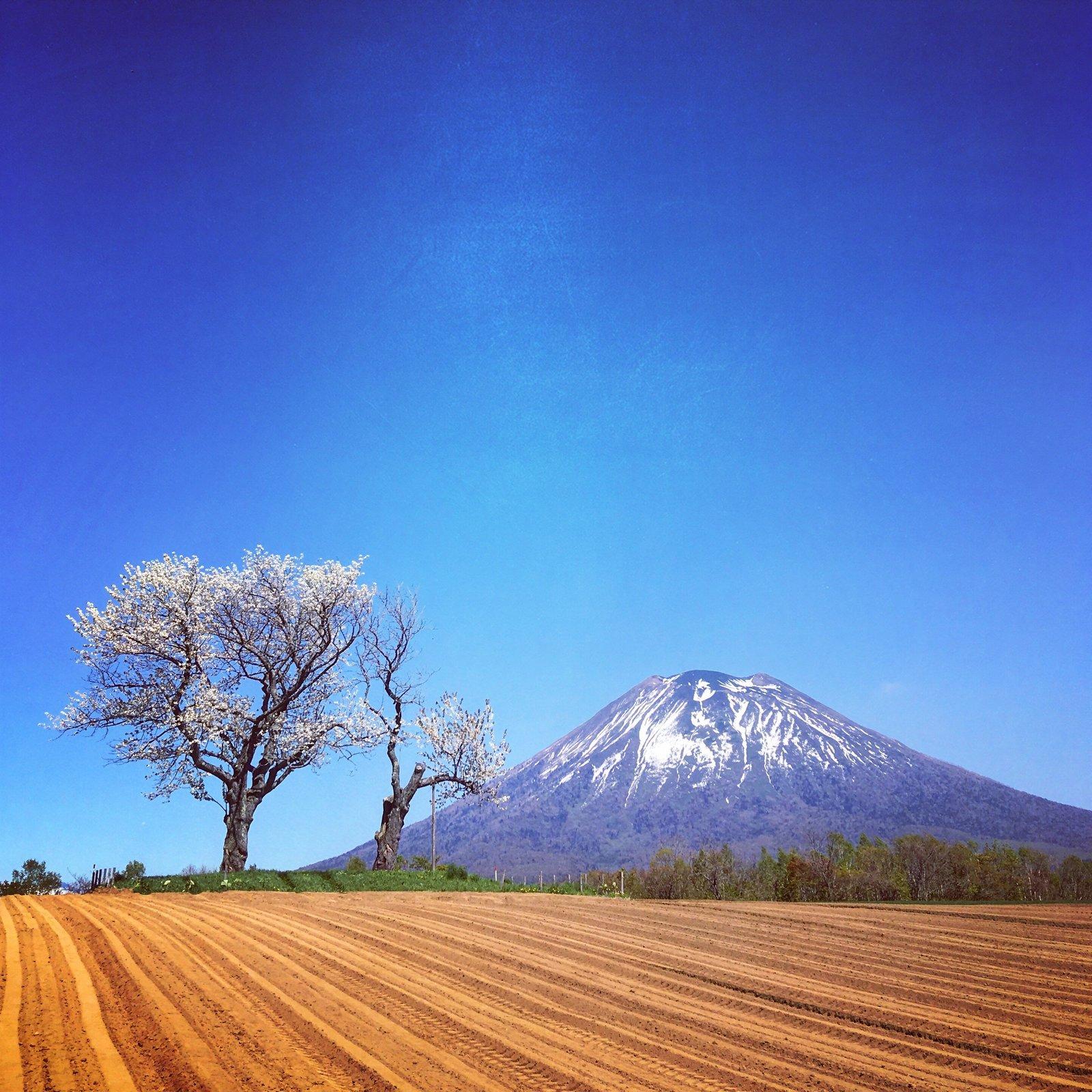 日本自由行羊蹄山