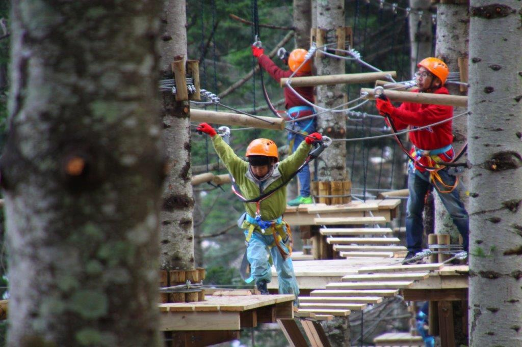 high ropes tree trekking course niseko summer activity