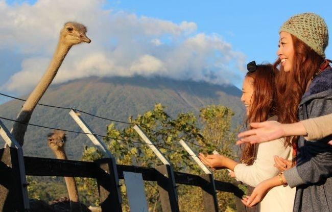 ostrich farm niseko