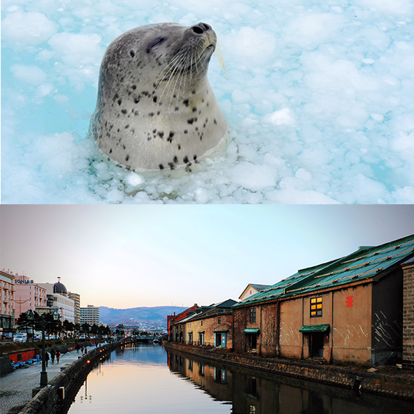 Otaru and the Otaru Aquarium: A Fun Day Trip!