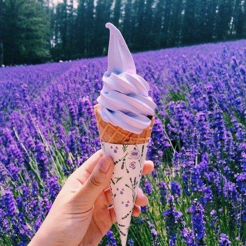 Lavender season in Furano Hokkaido 2020