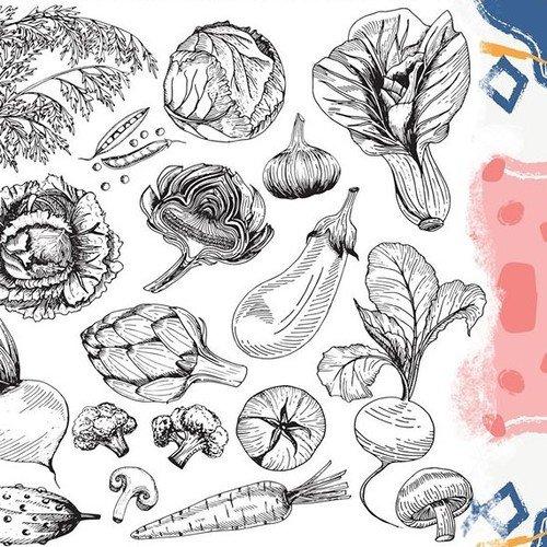 FARMER'S CAMPオーガニック野菜&食材の直売会