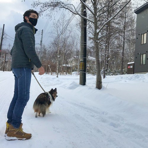 Dog friendly spots in Niseko, Japan