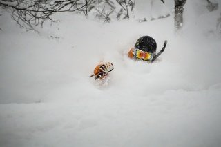 Deep powder niseko small